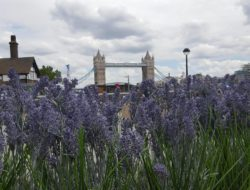 Trigger Your Curiosity London By Numbers