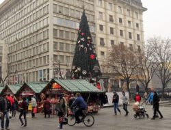 Christmas tree Belgrade
