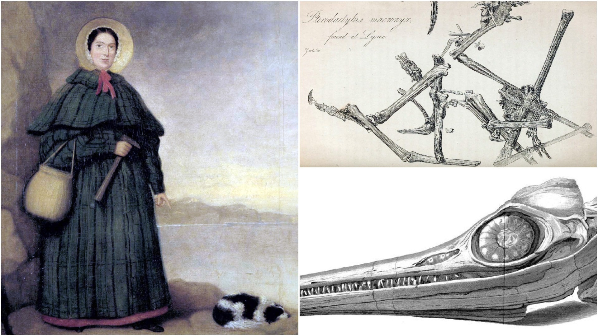 """Great paleontologist Mary Anning once """"lost to history"""" finally gets her own statue"""