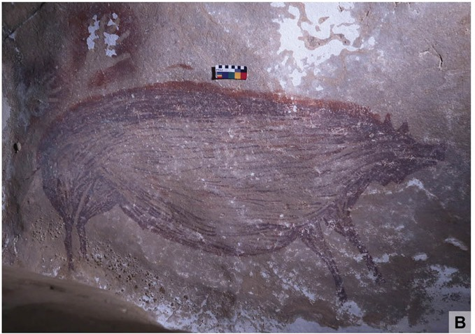 It's a pig! World's oldest cave painting was done in Indonesia 45,500 years ago